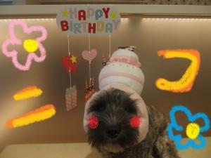 ニコ誕生日2