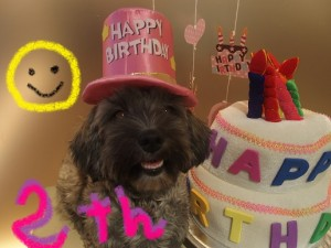 ニコ誕生日