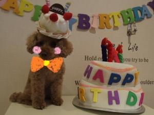 2ココちゃん誕生日