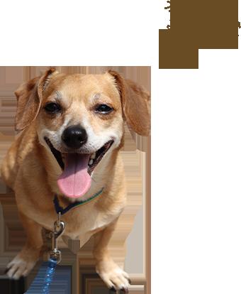 オーナー犬 夢ちゃん